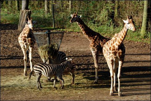 Burgers' Zoo Arnhem