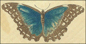 Vlinder van Merian