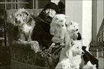 Prinses Wilhelmina met honden op bordes