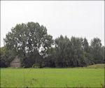 Huis Rijswijk achter de bomen